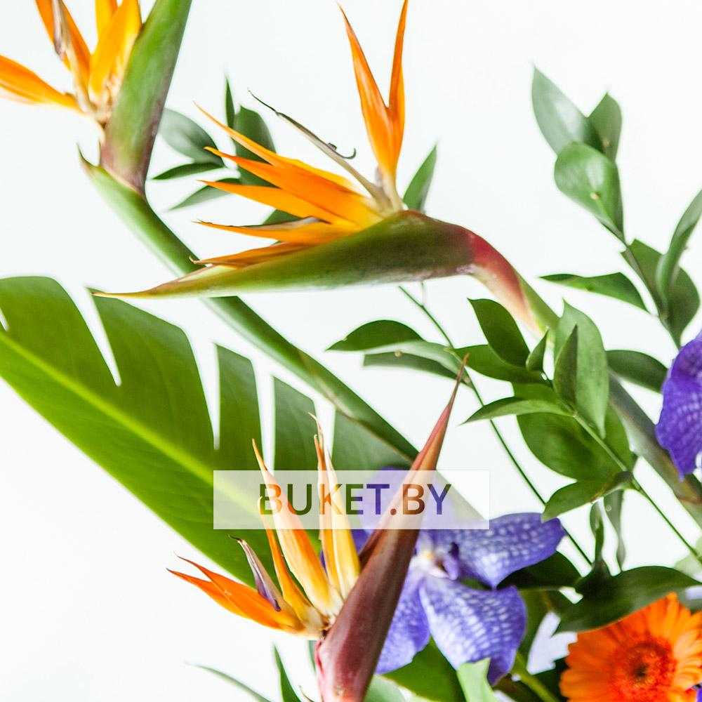 Композиция со стрелицией и орхидеей Ванда