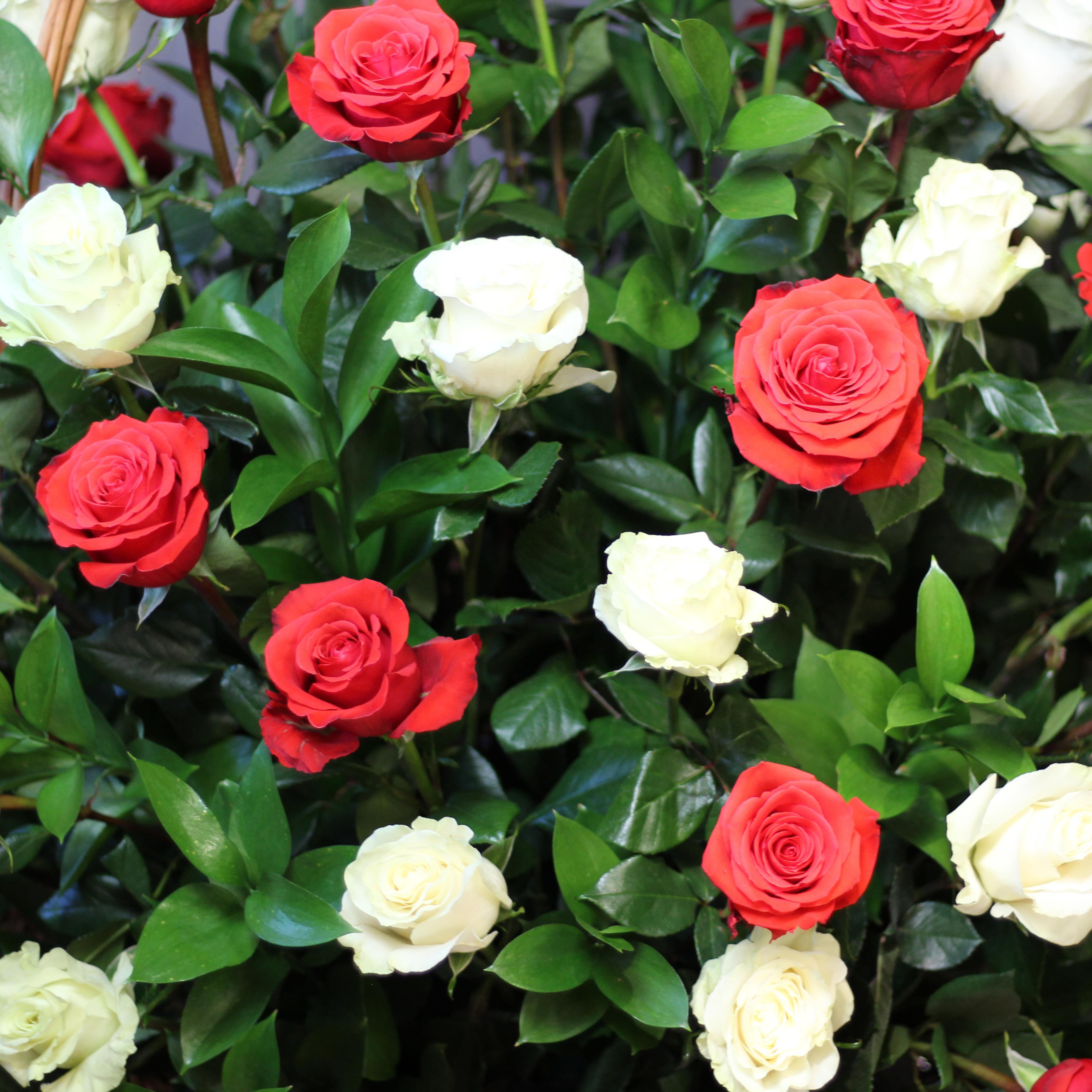 Корзина круговая с белыми и красными розами