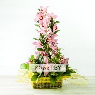 Композиция из орхидей с тюльпанами
